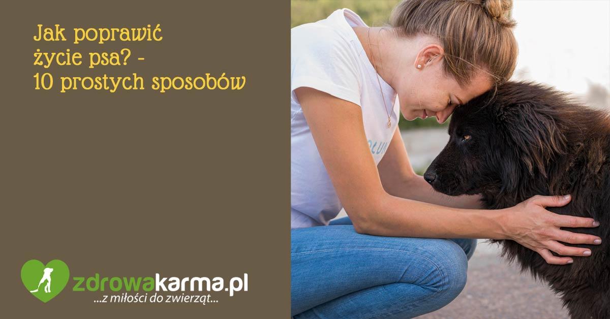 jak poprawić życie psa