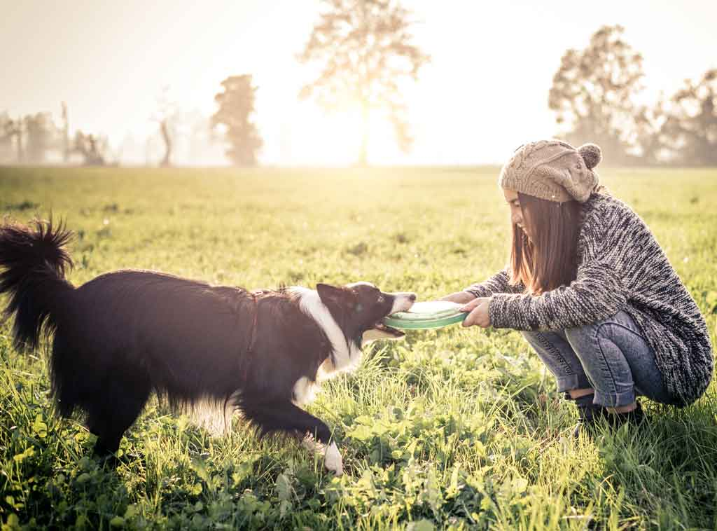 jak poprawić życie psa - ćwiczcie