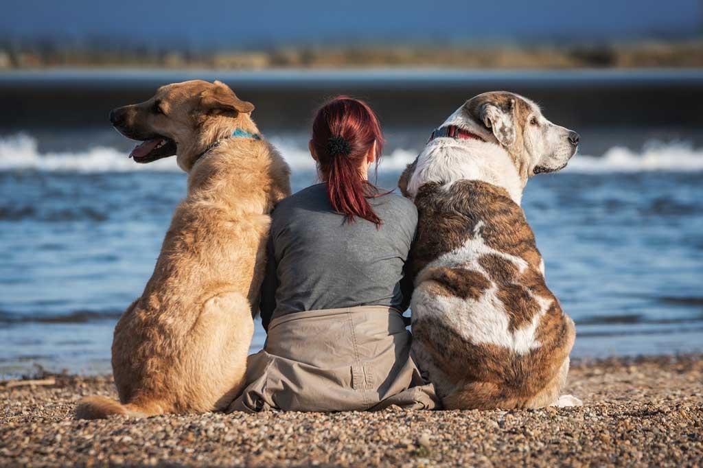 jak poprawić życie psa - znajdź czas