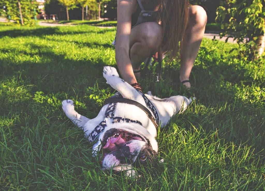jak poprawić życie psa - czochraj właściwie