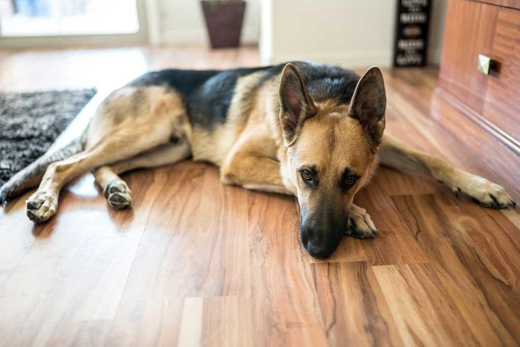 jak poprawić życie psa - walcz z nudą