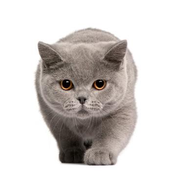 karmy dla kotów kategoria