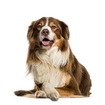 karmy dla psów kategoria