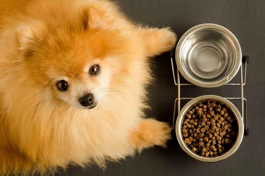 dieta eliminacyjna u psa