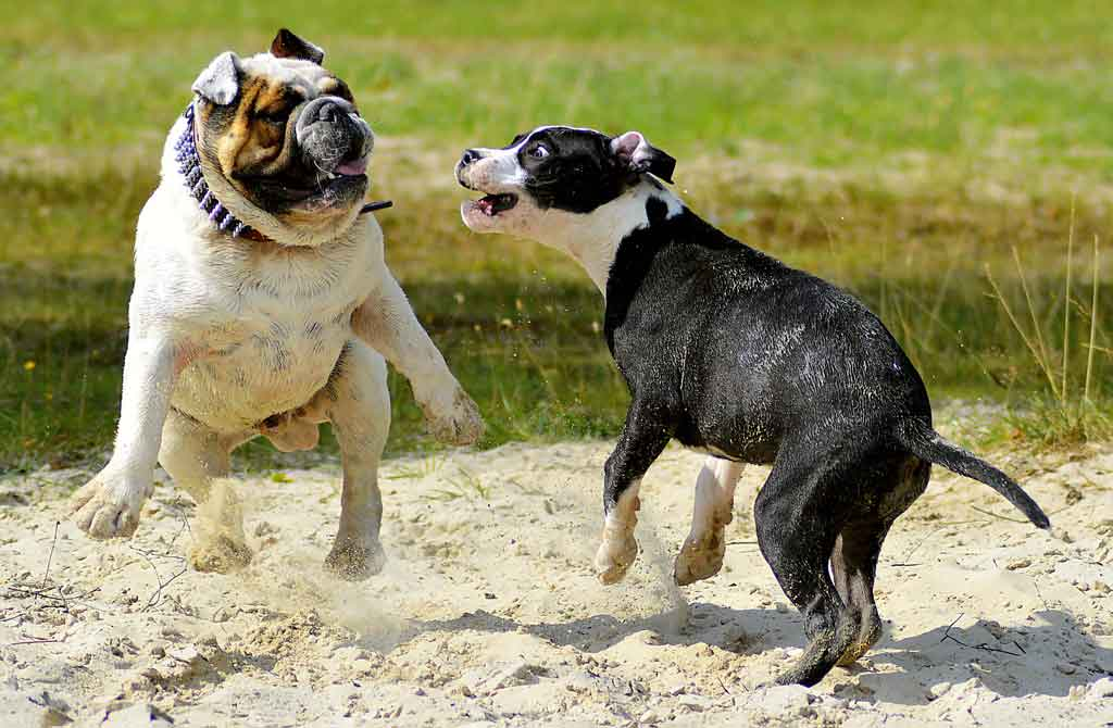 jak poprawić życie psa? - socjalizować