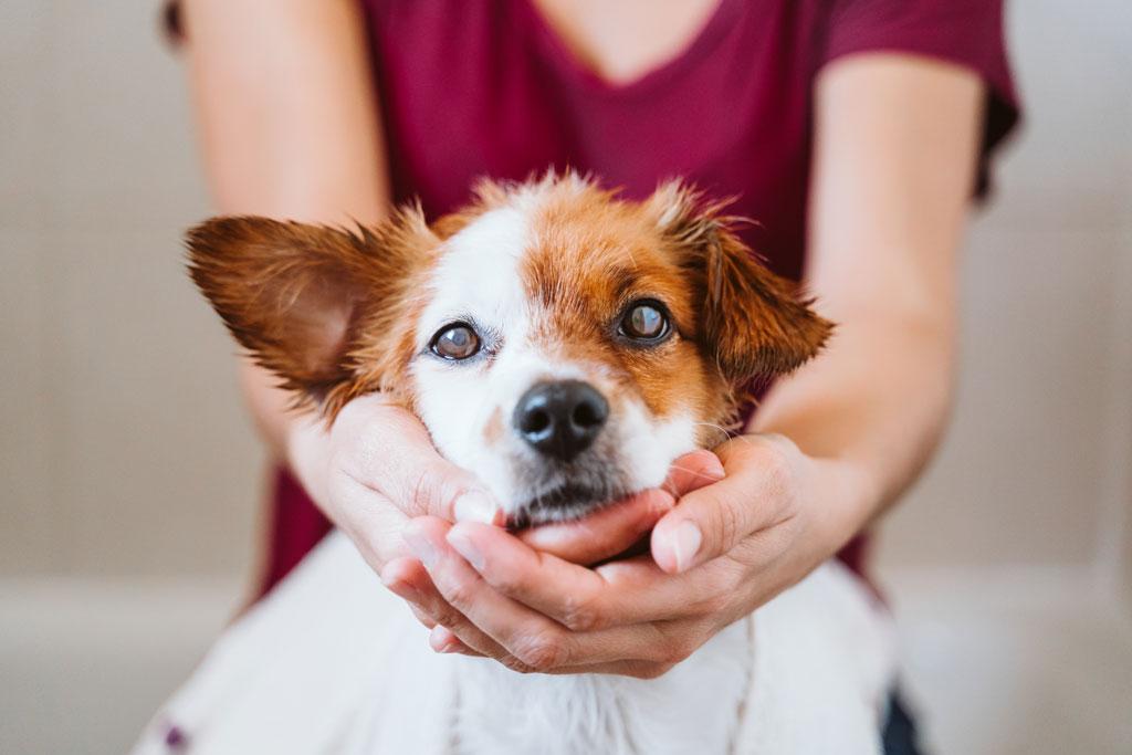 niewidomy pies wymaga opieki
