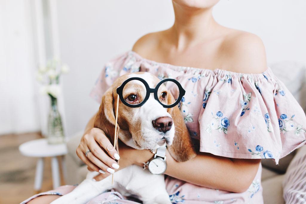 niewidomy pies - przystosuj swój dom