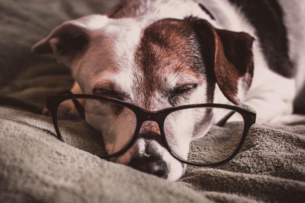 zapewnij spokój swojemu niewidomemu psu