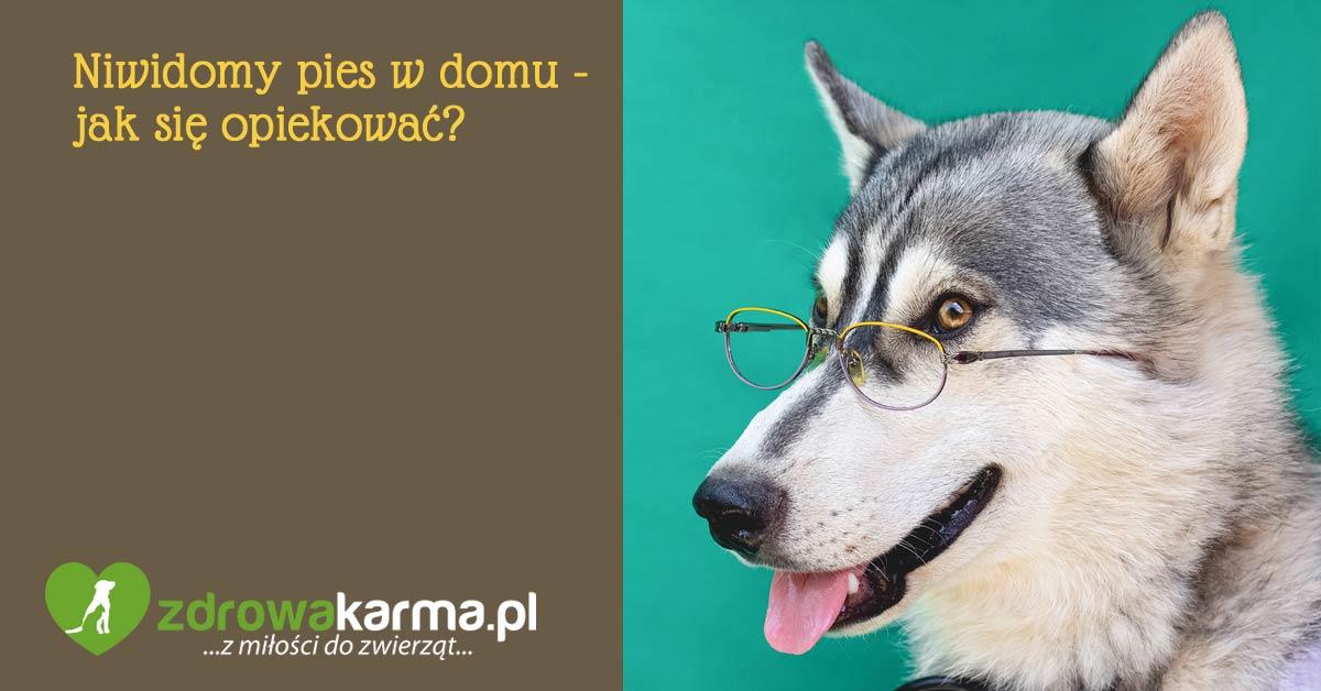 niewidomy pies w domu