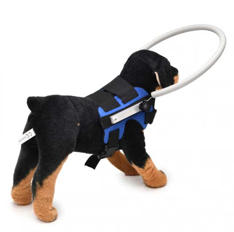 obręcz antykolizyjna dla niewidomego psa