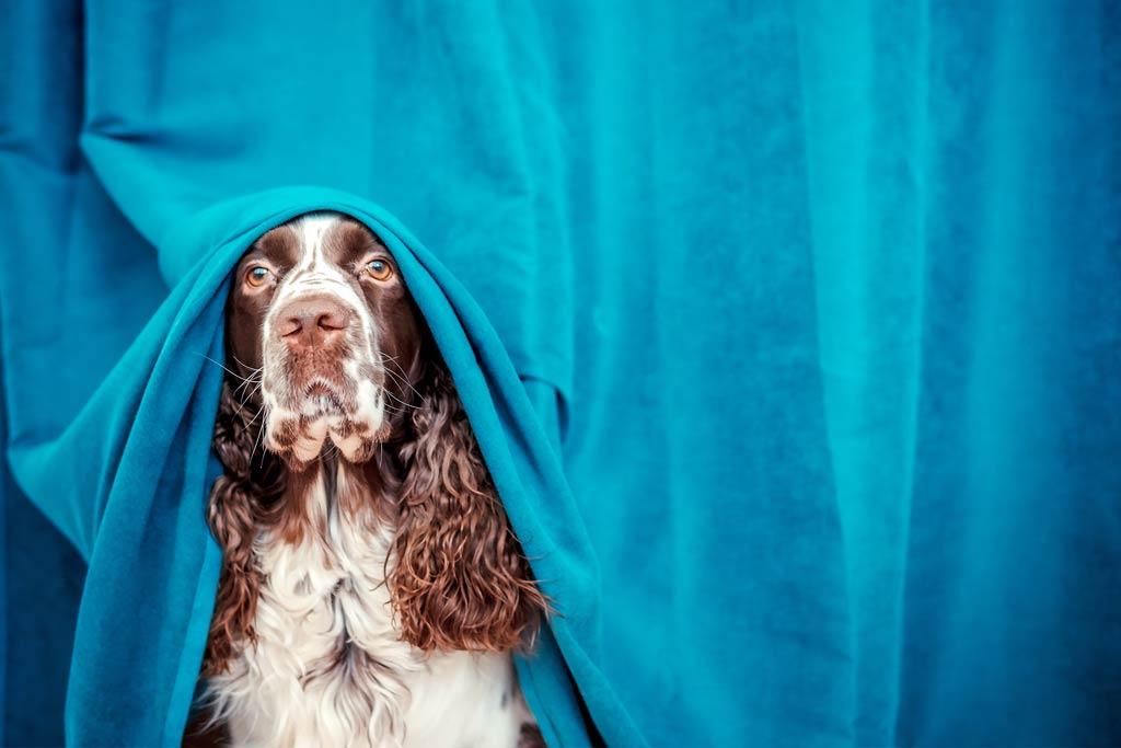 psie lęki często są źle odbierane przez opiekunów - jako brak posłuszeństwa