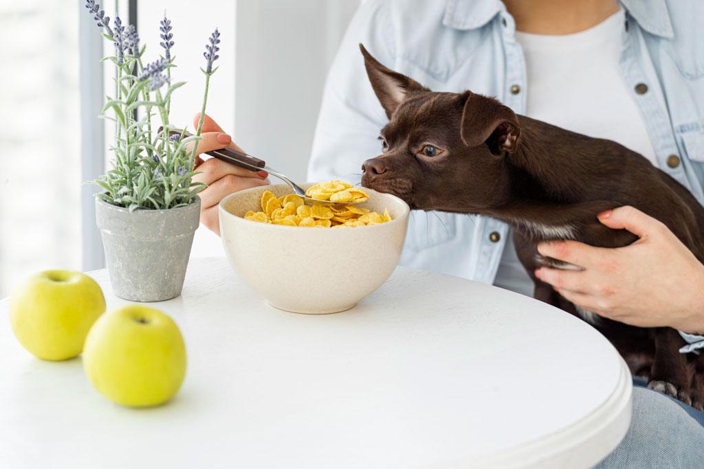 najczęstsze błędy wychowawcze u psa - pies nie wyrośnie z zachowań