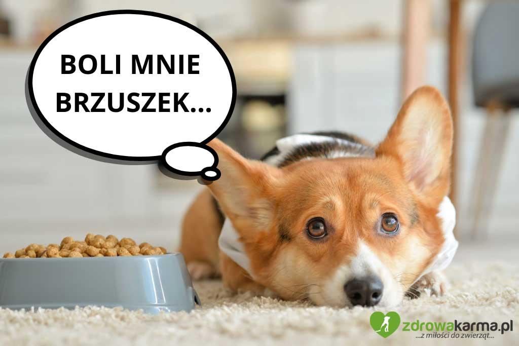 pies może tracić apetyt jeśli cierpi na jakieś schorzenie