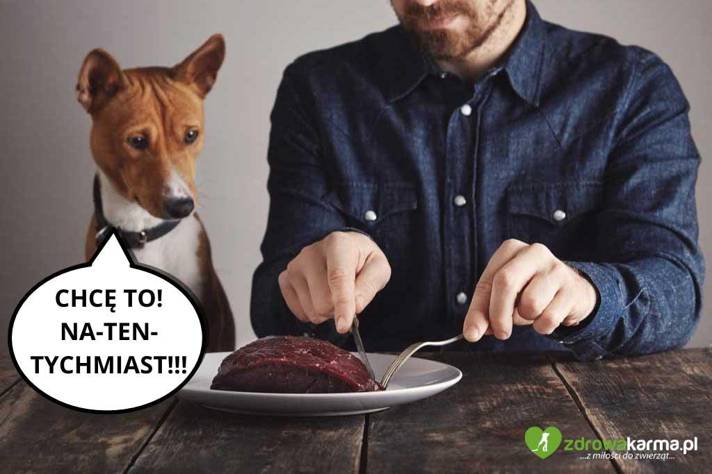 nie dokarmiaj psa jedzeniem ze stołu - nie będzie wybrzydzał