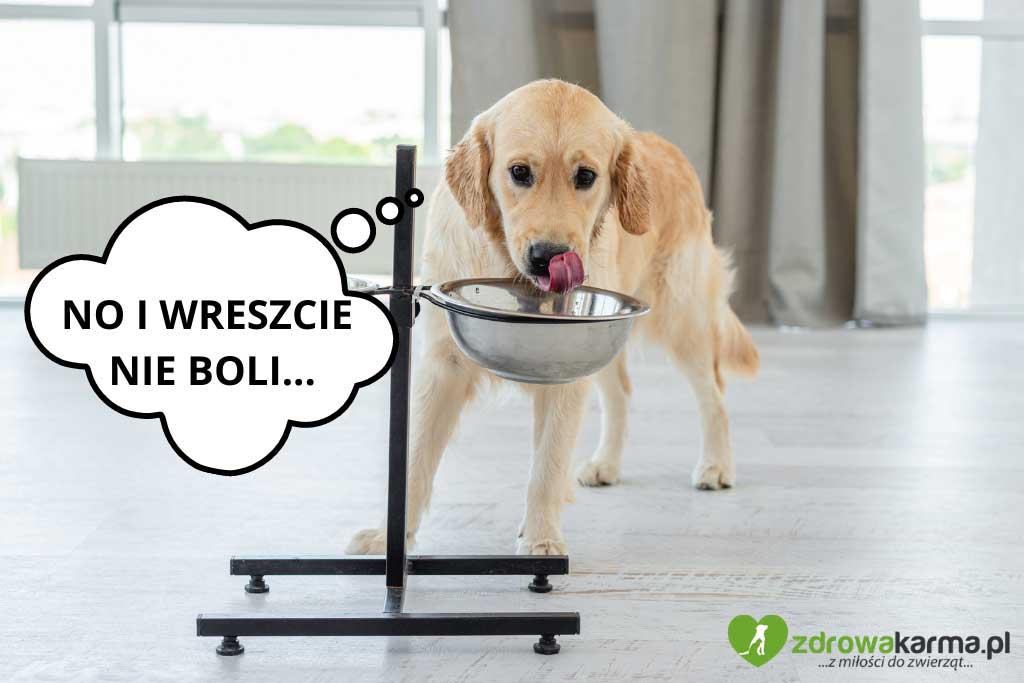 pies jest wybredny, a może odczuwa dyskomfort przy jedzeniu?
