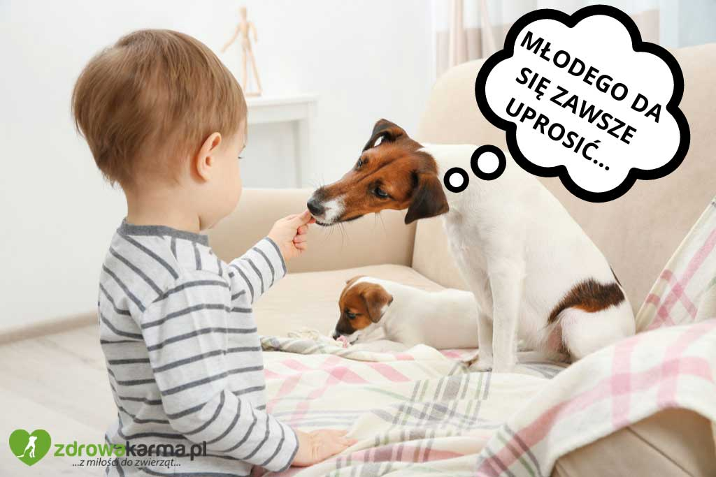 pies jest wybredny - może woli smakołyki