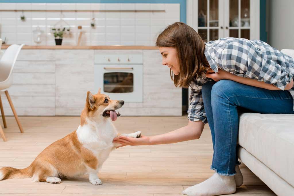 trening z psem jest źródłem satysfakcji