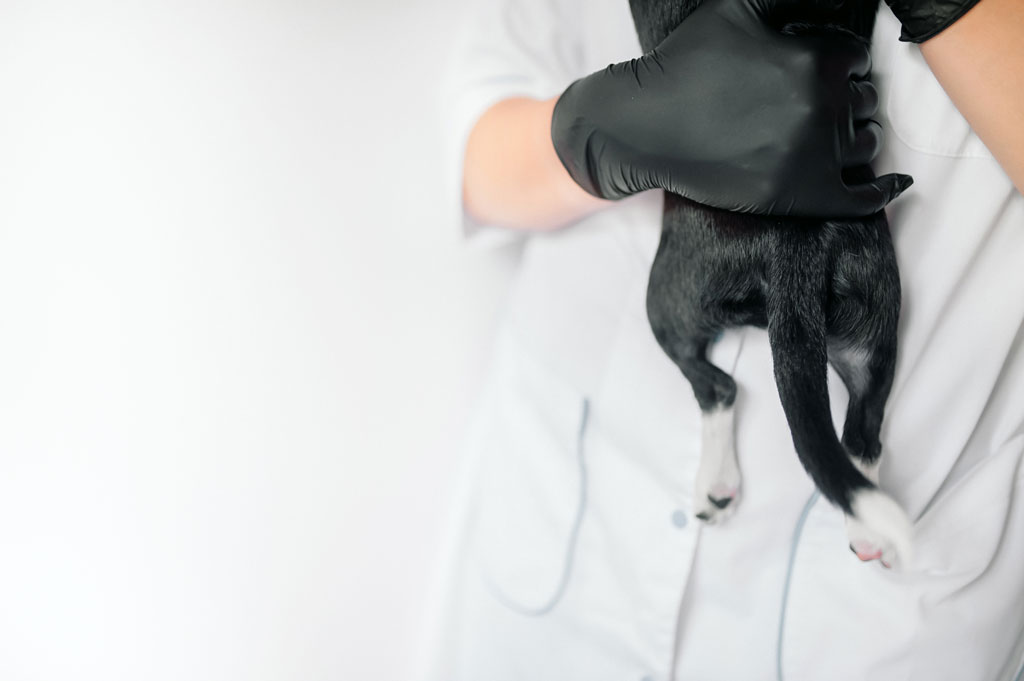 Gdy zaparcia u psa trwają zbyt długo, zgłoś się z psem do lekarza