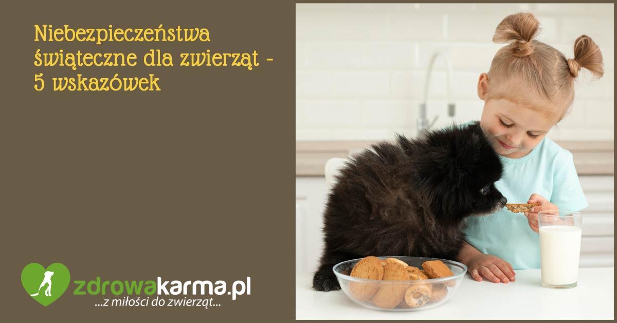 niebezpieczeństwa świąteczne dla zwierząt