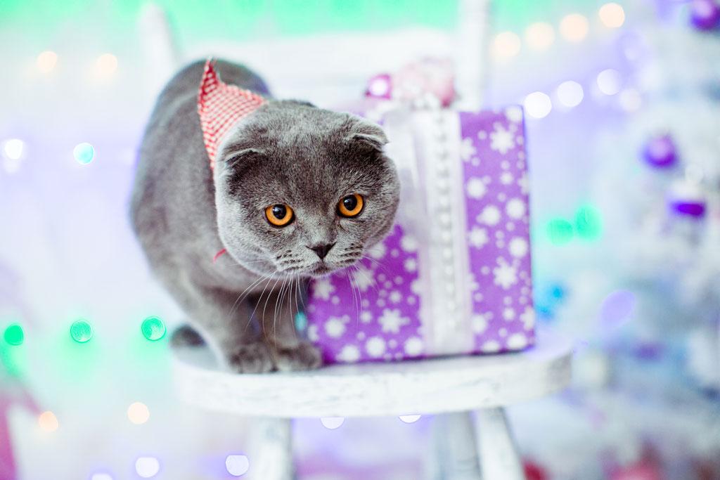plastikowe ozdoby świąteczne mogą być niebezpieczne dla zwierząt