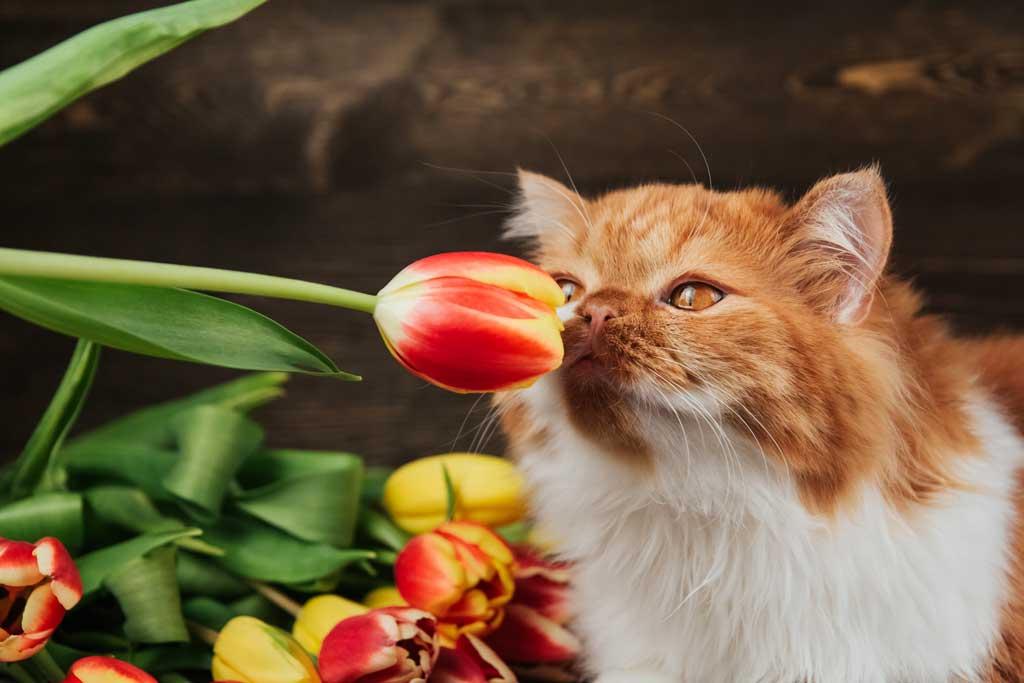 niebezpieczeństwa świąteczne dla zwierząt czają się m.in. w roślinach ozdobnych