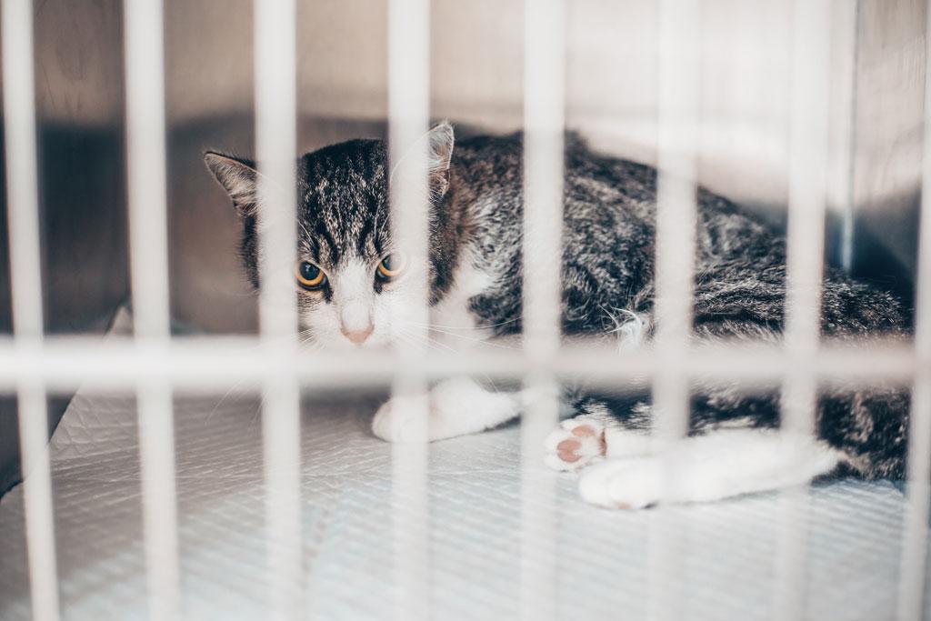 apatia u kotów może wskazywać na chorobę nerek