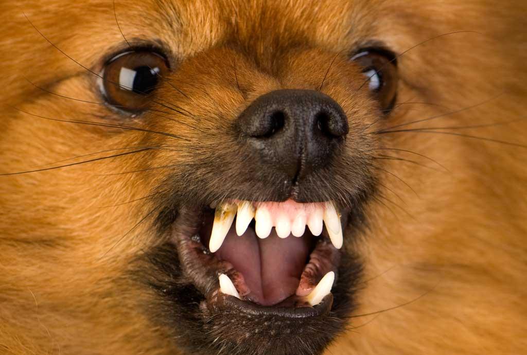 małe psy mogą być nadpobudliwe jeśli się boją