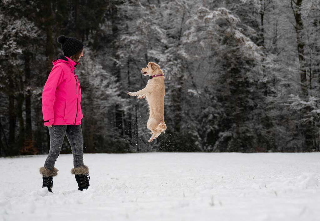 nadpobudliwy pies może skakać na ludzi