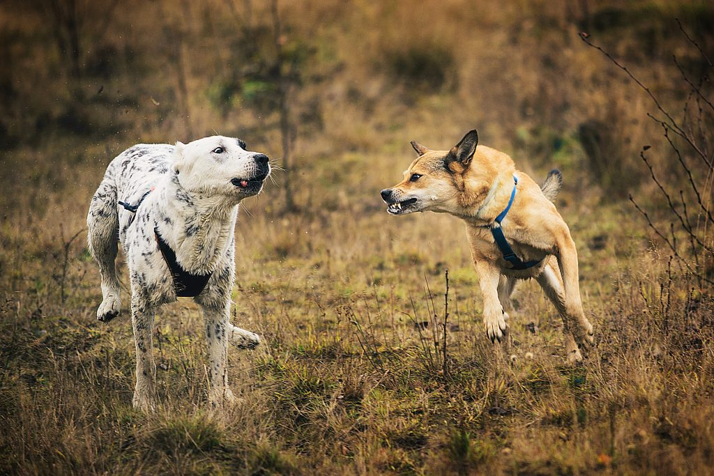 socjalizacja nadpobudliwego psa