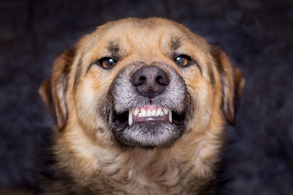 lęk i strach mogą wywoływać duże pobudzenie u psa