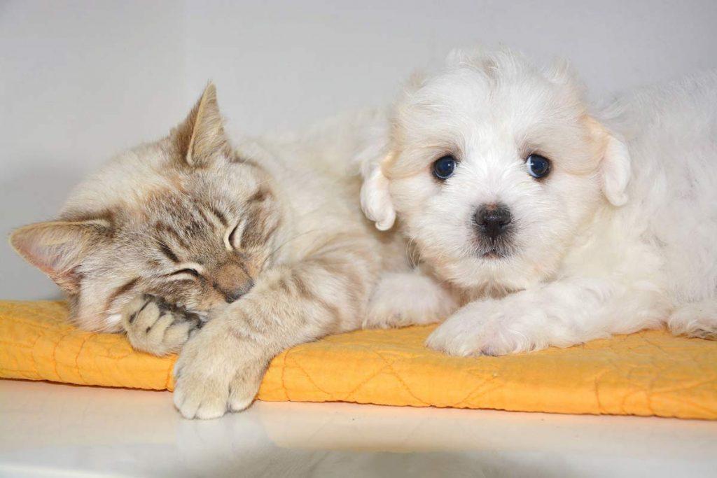 kocio-psi przyjacielski związek