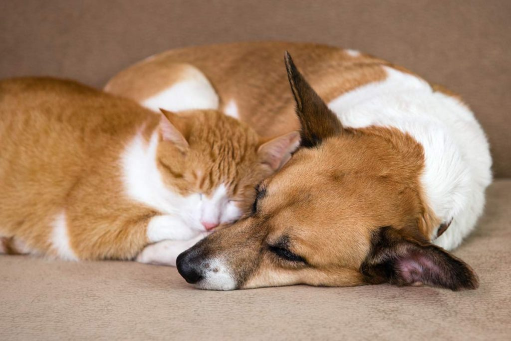 można oswoić psa z kotem
