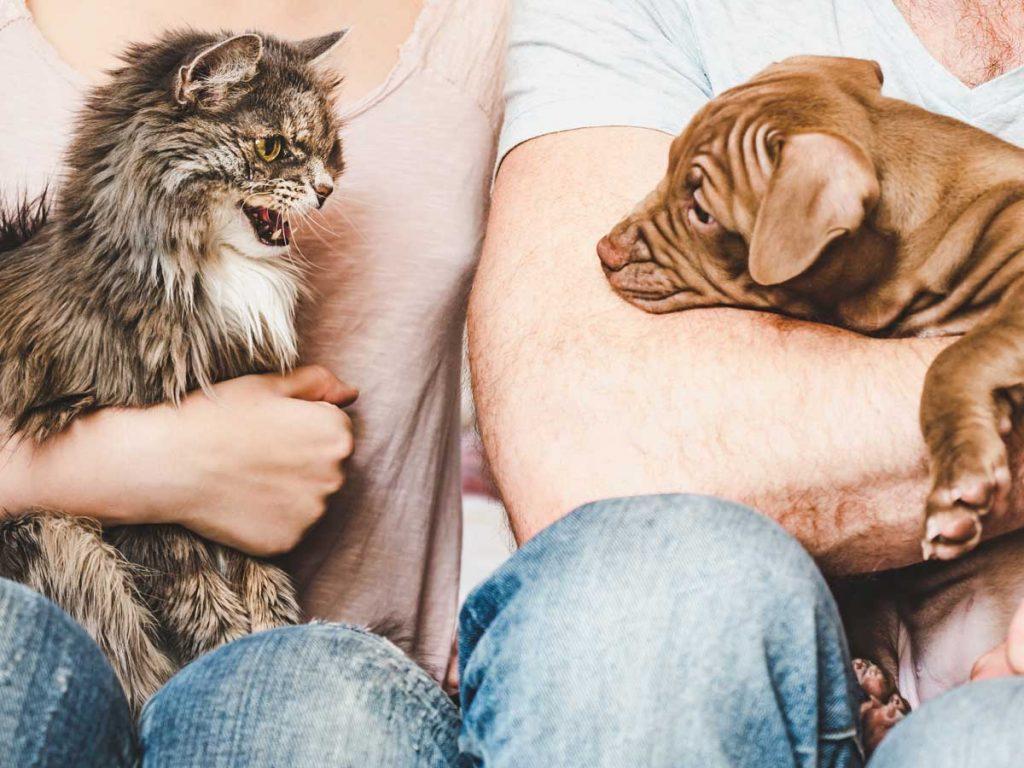 jak oswoić psa z kotem, aby się przyjaźniły od początku?